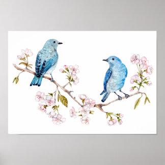 Mountain Bluebirds on Sakura Branch Poster