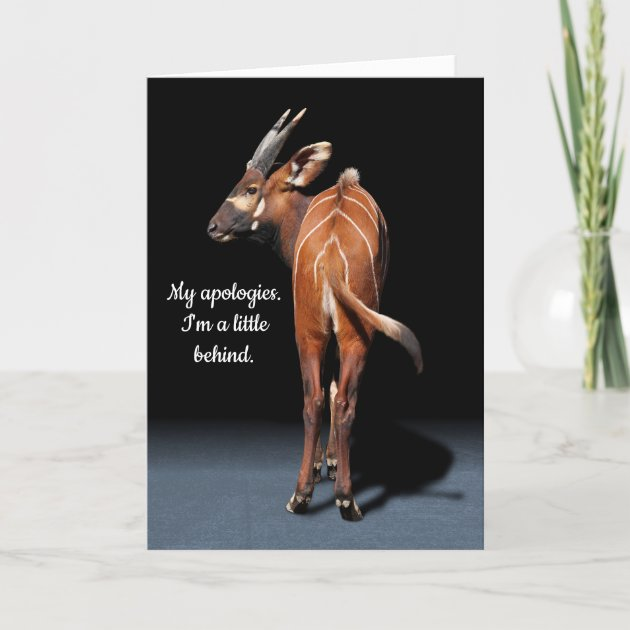 Studio Dalio - Mountain Bongo Humorous Belated Happy Birthday Card
