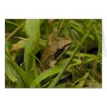 Mountain Chorus Frog Cards