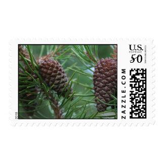Mountain Cones Postage