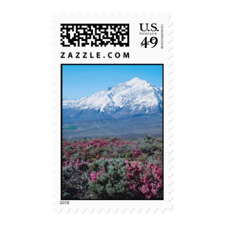 Mountain Field Postage