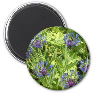 Mountain flowers magnet