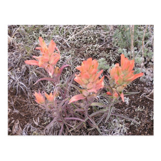Mountain Flowers Postcard
