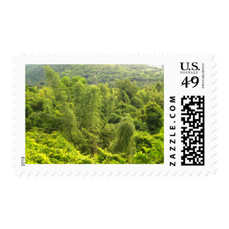 mountain   forest postage