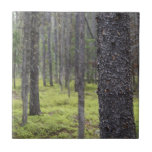 Mountain Forest Tiles