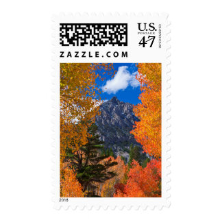 Mountain framed in fall foliage, CA Postage