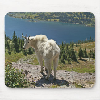 Mountain Goat at Glacier National Park Mouse Pad