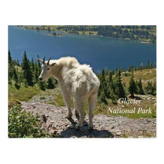 Mountain Goat at Glacier National Park Postcard
