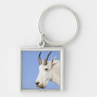 Mountain Goat Billy portrait at Logan Pass in Keychain