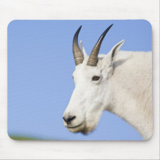 Mountain Goat Billy portrait at Logan Pass in Mouse Pad