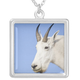 Mountain Goat Billy portrait at Logan Pass in Silver Plated Necklace