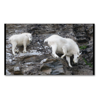 mountain goat business card magnet