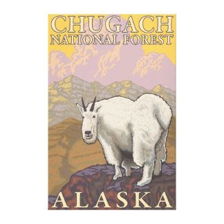 Mountain Goat - Chugach National Forest, Canvas Print