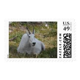 Mountain Goat- Glacier National Park Stamp