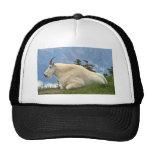 Mountain Goat Hat