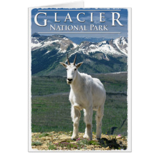 Mountain Goat in Glacier National Park Card