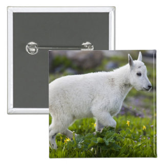 Mountain goat kid at Logan Pass in Glacier 2 Inch Square Button