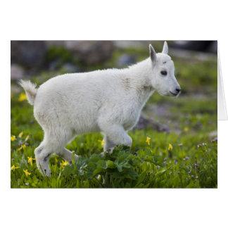 Mountain goat kid at Logan Pass in Glacier Card