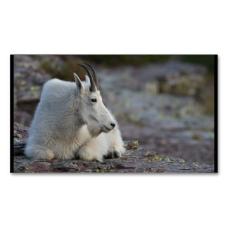 Mountain Goat Magnetic Business Card