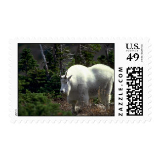 Mountain Goat-male Stamps