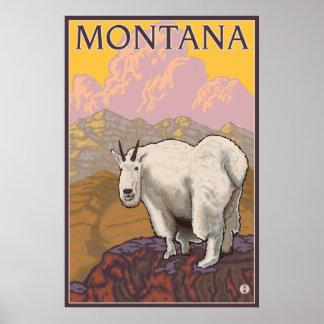Mountain Goat - Montana Posters