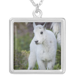 Mountain goat nanny with kid at Logan Pass in Silver Plated Necklace