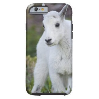 Mountain goat nanny with kid at Logan Pass in Tough iPhone 6 Case