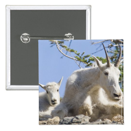 Mountain goat nanny with kid in Glacier National Button