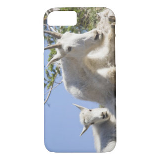 Mountain goat nanny with kid in Glacier National iPhone 7 Case
