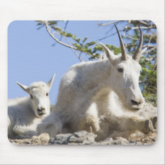 Mountain goat nanny with kid in Glacier National Mouse Pad