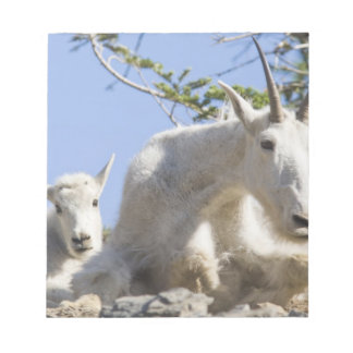 Mountain goat nanny with kid in Glacier National Memo Note Pad