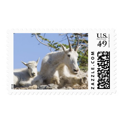 Mountain goat nanny with kid in Glacier National Postage Stamp