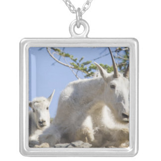 Mountain goat nanny with kid in Glacier National Silver Plated Necklace