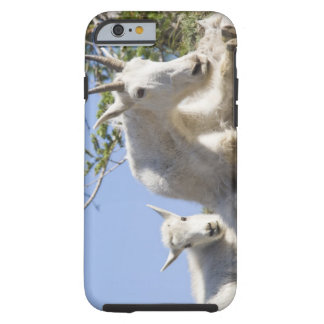 Mountain goat nanny with kid in Glacier National Tough iPhone 6 Case