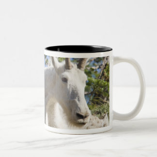 Mountain goat nanny with kid in Glacier National Two-Tone Coffee Mug