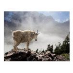 Mountain Goat on Gunsight Pass Trail Postcard
