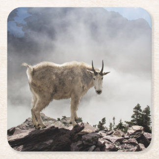 Mountain Goat on Gunsight Pass Trail Square Paper Coaster