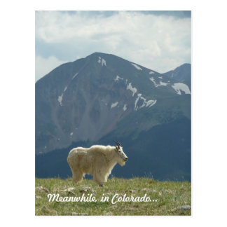 Mountain Goat on the Great Divide Postcard