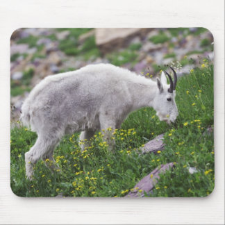 Mountain Goat Oreamnos americanus adult with 2 Mousepad