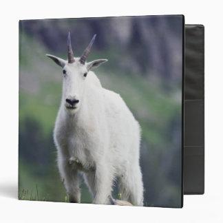 Mountain Goat, Oreamnos americanus, adult with Binder