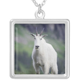 Mountain Goat, Oreamnos americanus, adult with Square Pendant Necklace
