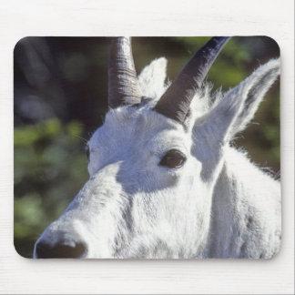 Mountain Goat, Oreamnos americanus, In Glacier Mouse Pad