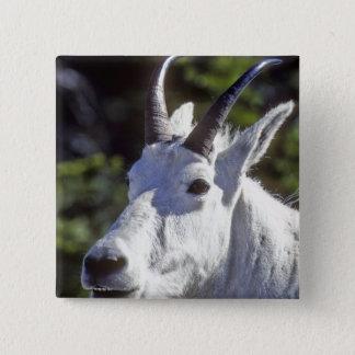 Mountain Goat, Oreamnos americanus, In Glacier Pinback Button