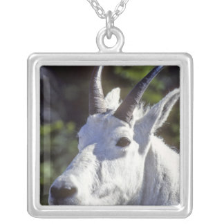 Mountain Goat, Oreamnos americanus, In Glacier Silver Plated Necklace