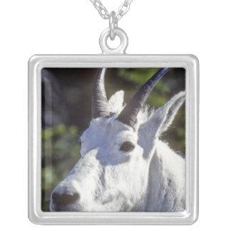 Mountain Goat, Oreamnos americanus, In Glacier Square Pendant Necklace