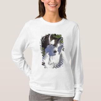 Mountain Goat, Oreamnos americanus, In Glacier T-Shirt