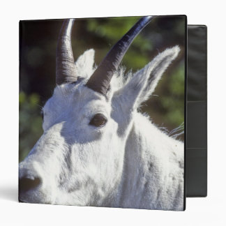 Mountain Goat, Oreamnos americanus, In Glacier Vinyl Binder