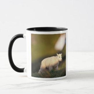 mountain goat, Oreamnos americanus, kid on a 2 Mug