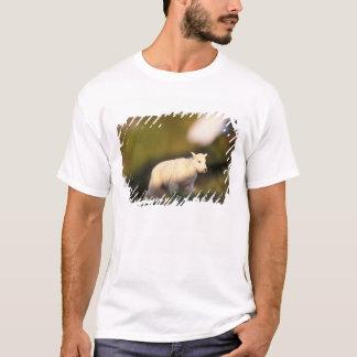 mountain goat, Oreamnos americanus, kid on a 2 T-Shirt