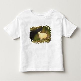 mountain goat, Oreamnos americanus, kid on a Toddler T-shirt